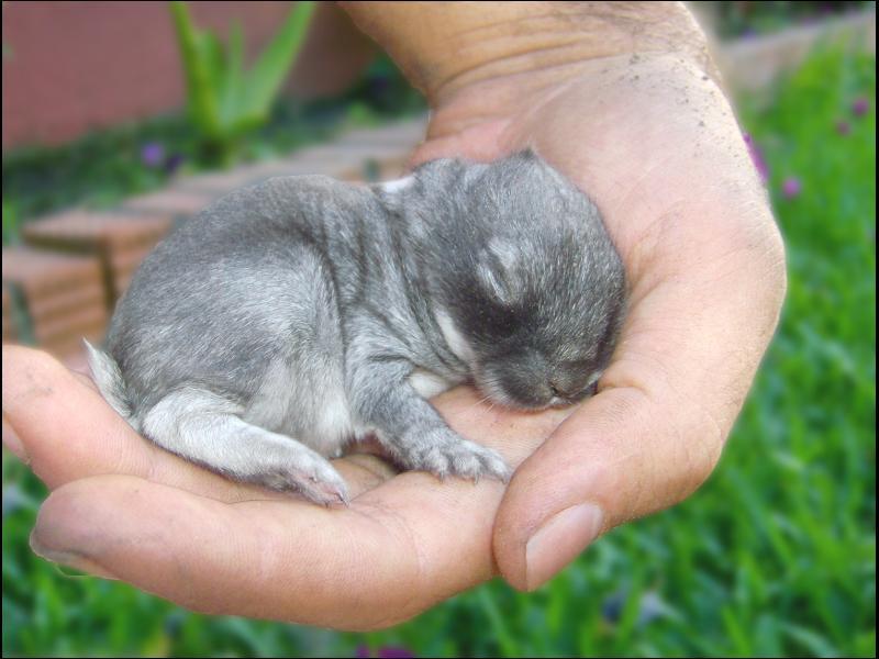 Conejo gordo 3 - ALGODISCRETO