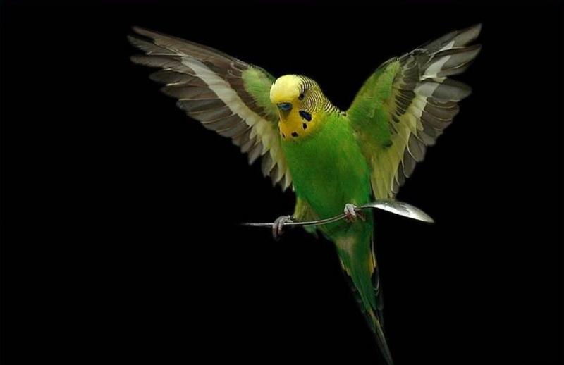 Kuş Kafesi Nasıl Temizlenir
