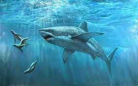 Goblin shark - Simple English Wikipedia, the.