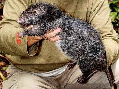 farmapest fare resimleri ile ilgili görsel sonucu