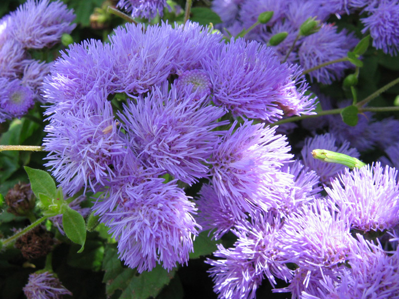 Yazın çiçek açan bitkiler hangisidir yazın çiçeklerini acan