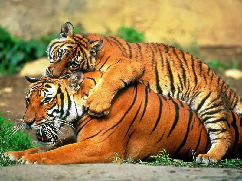 Diğer hayvanlarin özellikleri için tiklayiniz