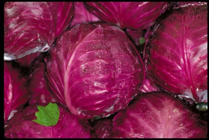 kırmızı lahana resimleri