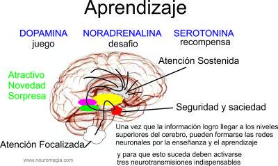 PSICOFISIOLOGÍA UNO: ASI SE GENERA EL APRENZAJE