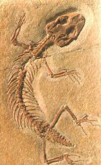 http://img.webme.com/pic/n/nicometropolis/fosil.jpg