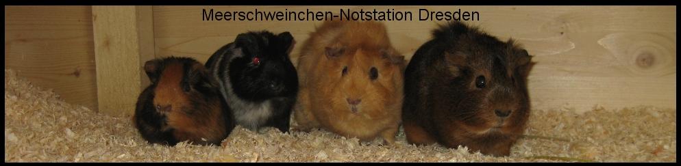 Schweinchenhilfe - Meerschweinchen-Notstation Dresden