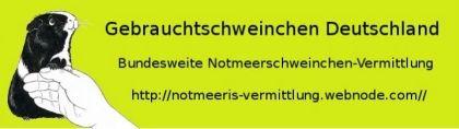 Gebrauchtschweinchen Deutschland - Pflegestelle Einbeck / Dassel