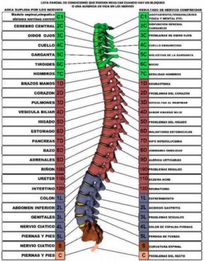 El espasmo de los músculos en el departamento de pecho de la columna vertebral el tratamiento