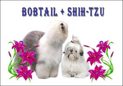 An den Beitrag angehängtes Bild: http://img.webme.com/pic/o/oes-bobtail/bild2010hp.jpg