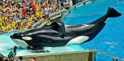 orca homepage tilikum