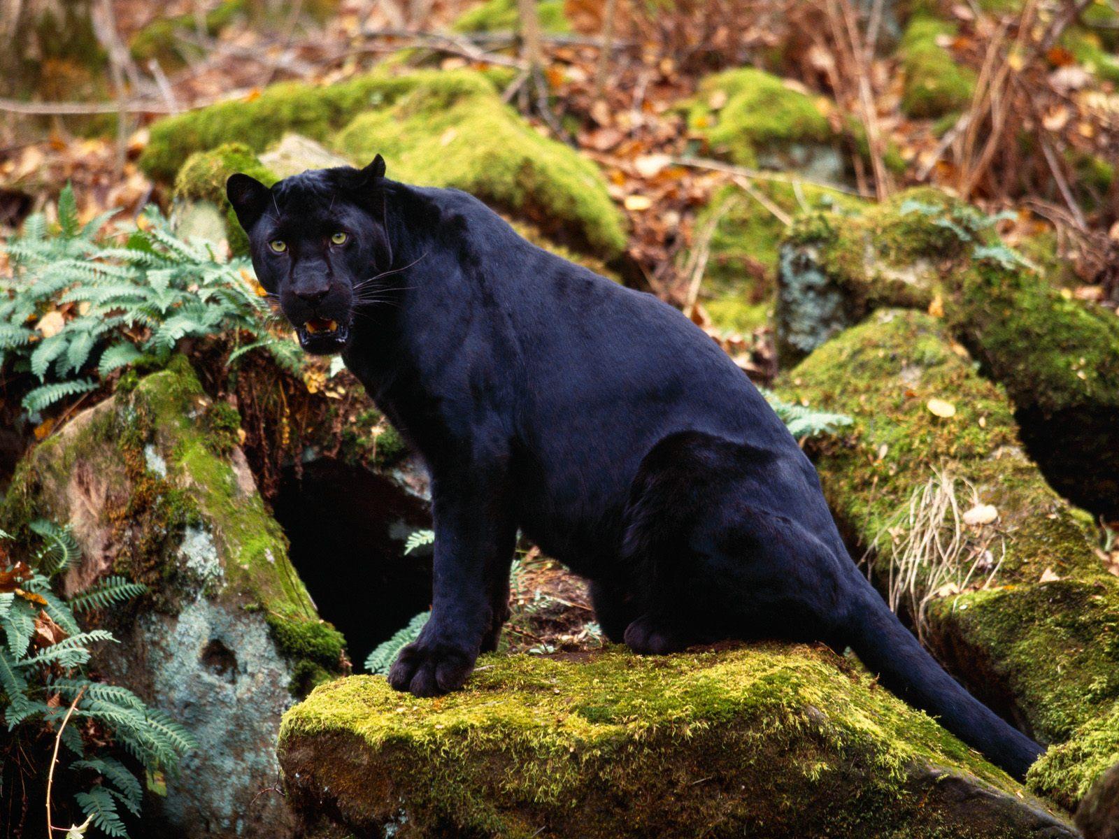 My Homepage - Animal world - photo#25