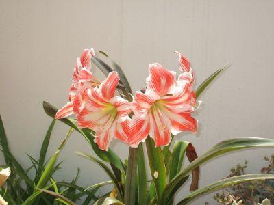 Parapasarunratillo trucos e jardineria y plantas for Trucos jardineria