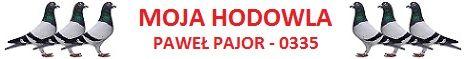 MOJA HODOWLA - PAJOR Pawe�-0335