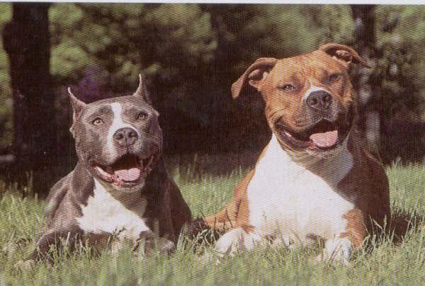 esteroides para perros