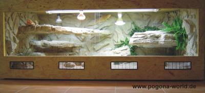pogona terrarium r ckwandbau. Black Bedroom Furniture Sets. Home Design Ideas
