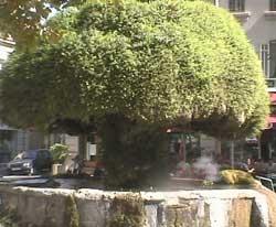 Provence infos salon - Allocine salon de provence les arcades ...