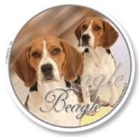 rh n lapinkoira ber beagle s. Black Bedroom Furniture Sets. Home Design Ideas