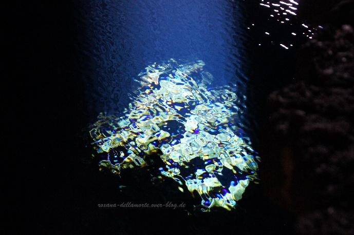 http://img.webme.com/pic/r/roxana-dellamorte/jameosagua1.jpg