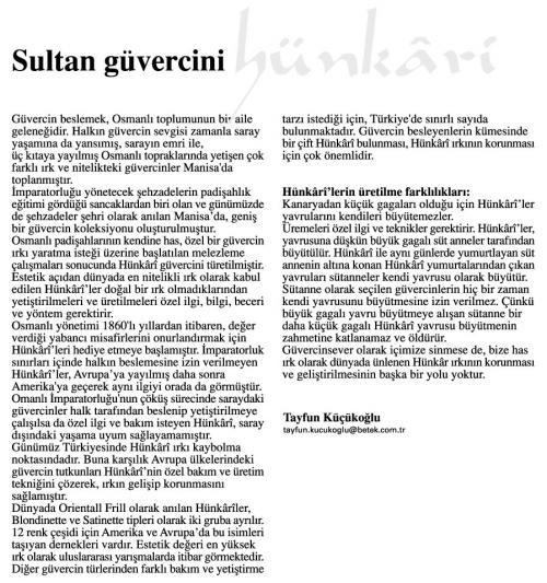 Osmanlı Güvercin Hünkari Hunkari14