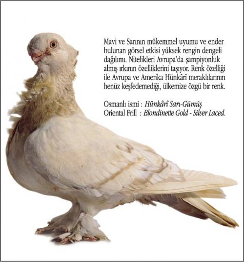 Osmanlı Güvercin Hünkari Hunkari3