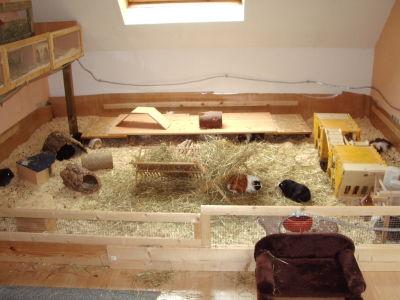 was ist besser k fig kaufen oder bauen seite 2 meerschweinchen forum. Black Bedroom Furniture Sets. Home Design Ideas