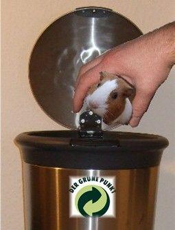 Meerschweinchen Andi kommt in die Mülltonne