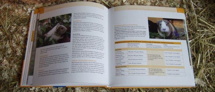 Meerschweinchen Conny in Heilpflanzen für Tiere – von Petra Pawletko