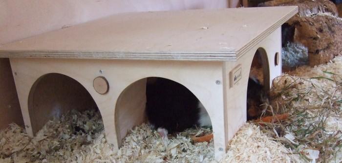 Meerschweinchen Flummi im Doppelhaus