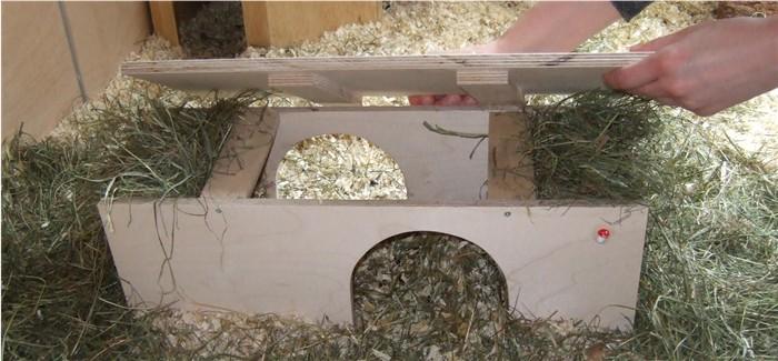 Meerschweinchen Salami in der Doppeltunnelheuraufe