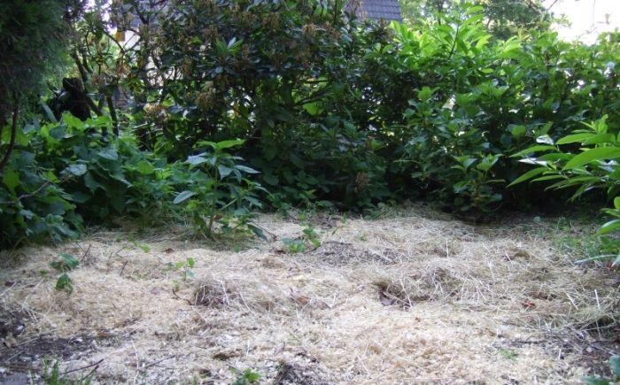 Meerschweincheneinstru im Garten