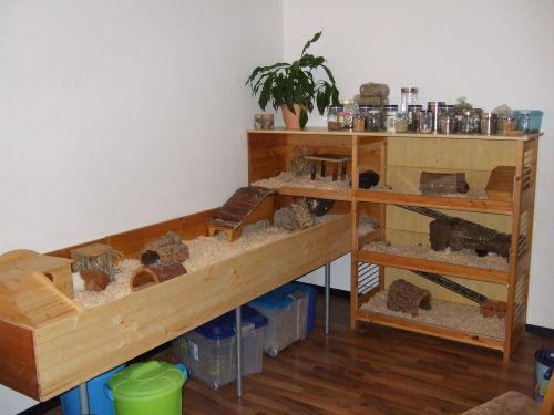 Die Meerschweine im neuen Eigenbau