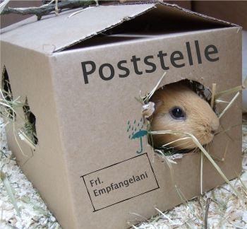 Empfangelani in der Poststelle von sifle.de