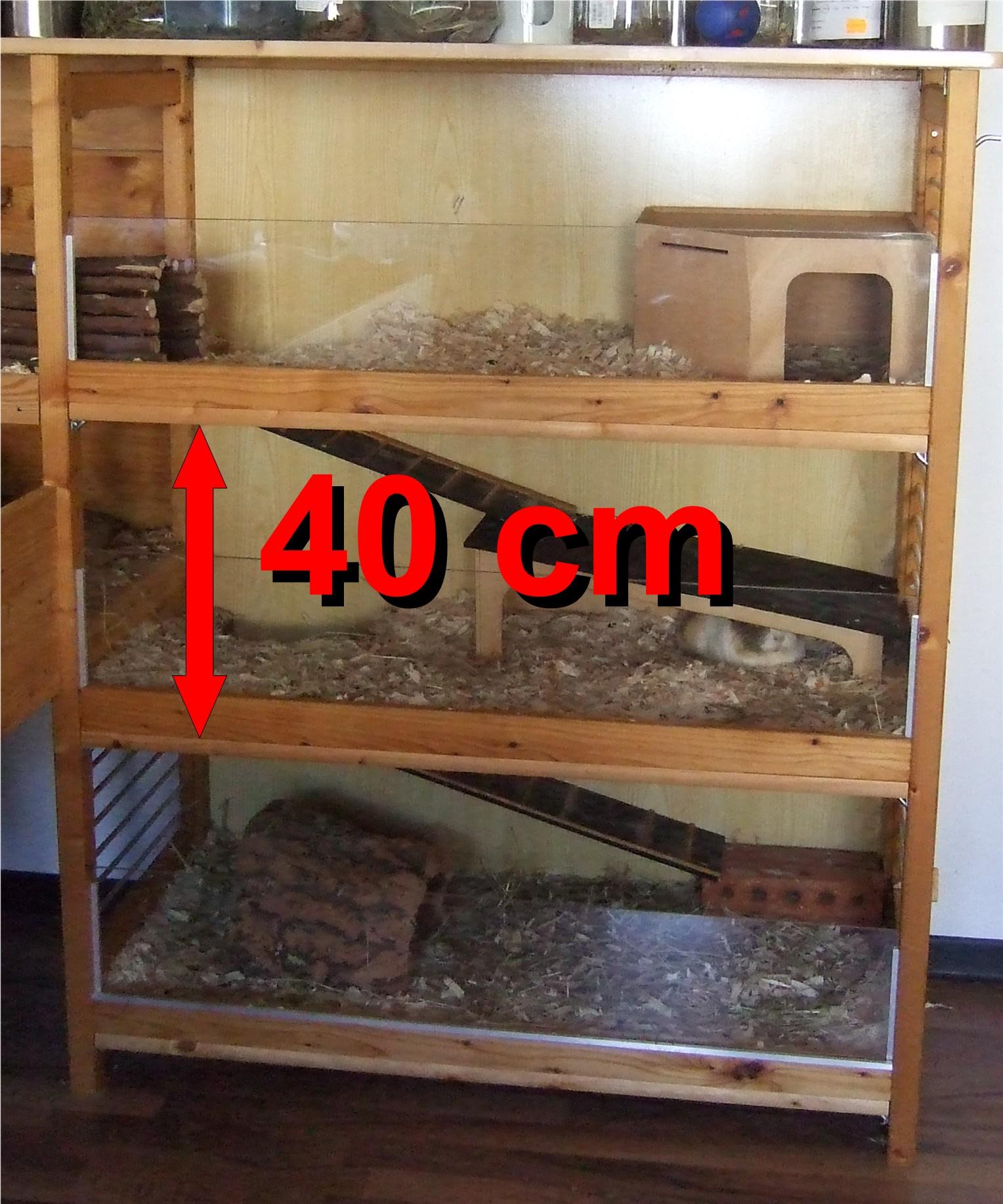Meerschweinchen Etagenh&oouml;he beim Eigenbau