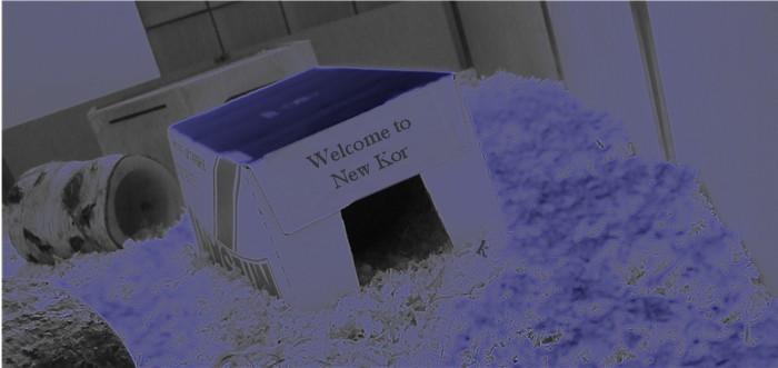 New Kork im Jahre 2029