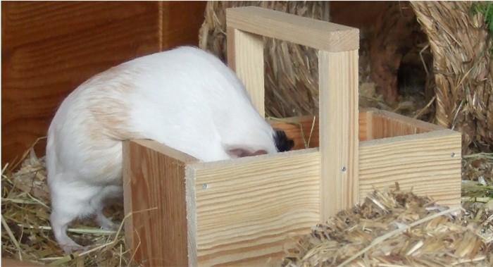 Fips wühlt neugierig in der Holzkiste