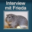 Interview mit Meerschweinchen Frieda