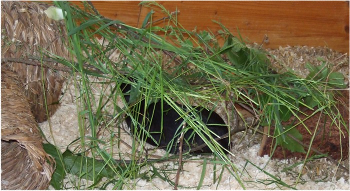 Ninja unterm Grasdach macht es sich höhlig