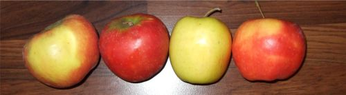 Hasenapfel