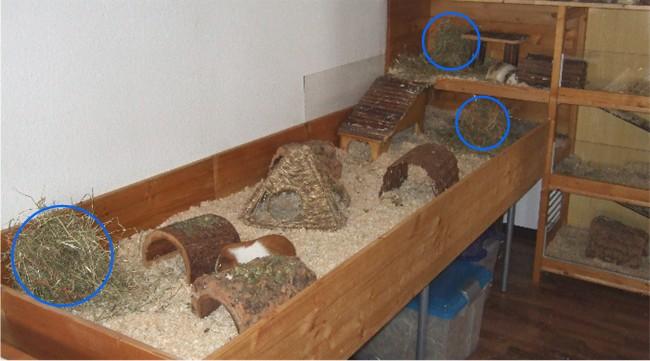 Hau Auswahl im Meerschweinchen Gehege