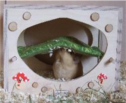 Meerschweinchen Ilani sitzt unter dem Himmelbett
