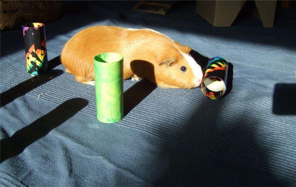 Meerschweinchen Andi spielt auf der Decke Indira von IKEA