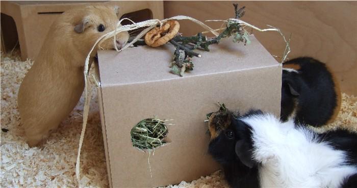 meerschweinchen spielzeug. Black Bedroom Furniture Sets. Home Design Ideas
