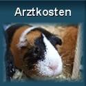 Kosten für Tierarzt