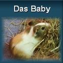 Meerschweinchen Conny als Baby