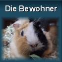 Die Meerschweinchen von sifle.de