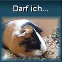 Urheberrecht und mehr für SIFLE Meerschweinchen