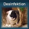 Desinfektion im Meerschweinkäfig