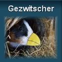 Ouml;tti-Gezwitscher
