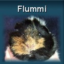 Meerschweinchen Flummi