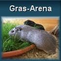 Gras Arena für Meerschweinchen